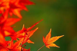 s-autumn.jpg