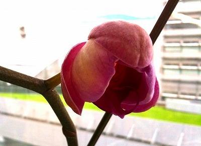 s-flower.jpg