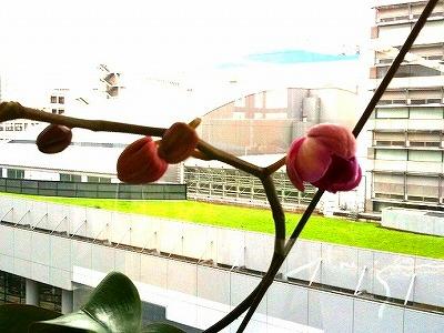 s-flower2.jpg